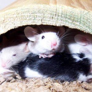Kun je stoffen testen zonder proefdieren?